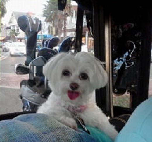 She loves to ride in the basket of our golf cart.