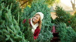 Tips for Choosing a Live Christmas Tree
