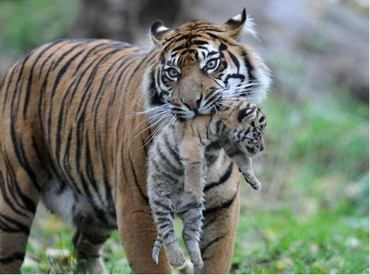 Mother and cub.
