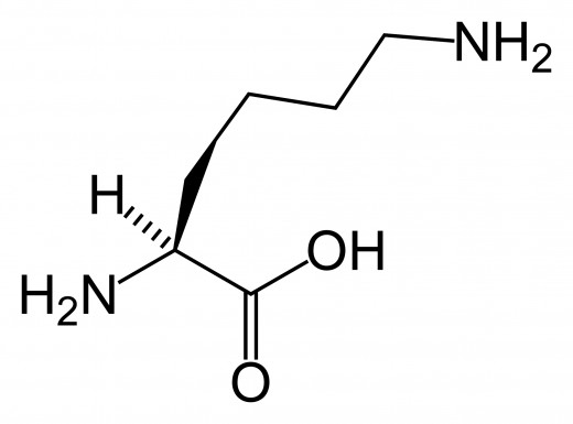 L-Lysine Molecular Structure -- public domain