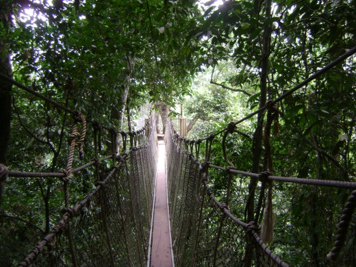 I conquered my fear of heights by crossing this canopy rope walk in Kakum Park in Ghana West Africa...so surely I can slay the word dragon.
