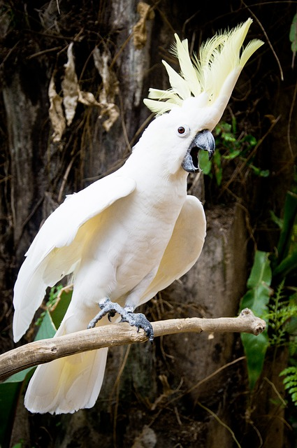 Parrots love to make loud noises and throw tantrums!