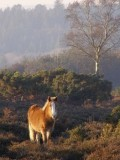 The Importance of the New Forest, Southern England
