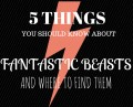 5 Things You Should Know About The 'Fantastic Beasts And Where To Find Them' Movie!