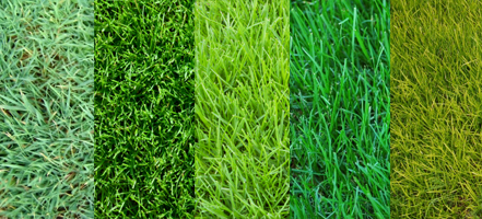 Types Of Grasses