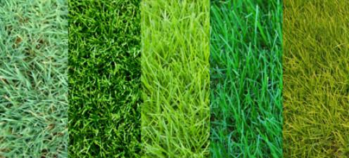 Types Of Grasses