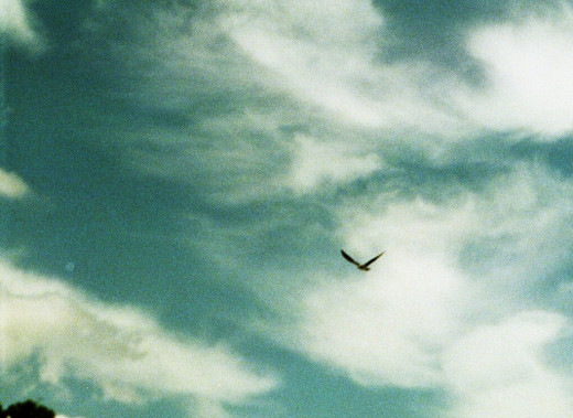 Freely, birds to fly in celestial heights...