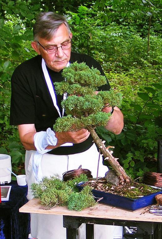 Bonsai gardening: Ajustment of a Bonsai