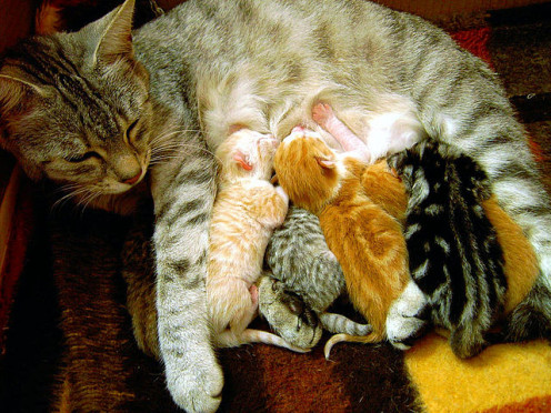 Queen cat with kittens.