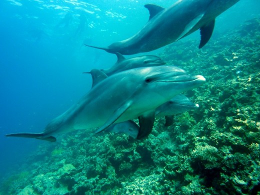 Dolphins help other sick or injured dolphins by swimming under them for hours at a time to help them breathe.