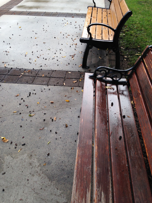I never thought it would be so nice to see wet benches and tree buds and leaves on the ground.