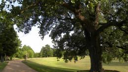Tree shaded trails at Katherine Fleischer Park Wells Branch Austin Texas