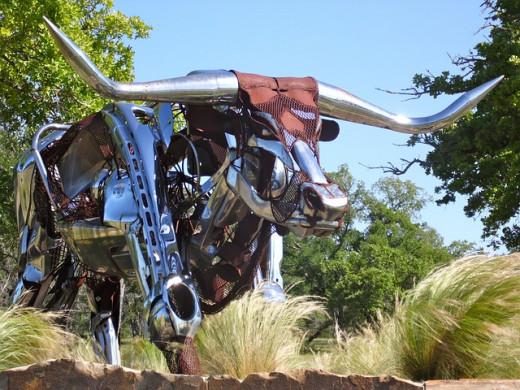 Texas Longhorn in Austin.
