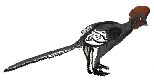 (Possibly male) Anchiornis, also by Matt Martyniuk.