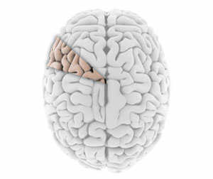 Using ten percent of your brain.  Originally from http://theunilaglss.com/2014/03/29/the-truth-about-the-10-percent-of-brain-myth/