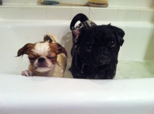 Do my dogs know I'm hoping they don't jump out of the tub while I take their picture?
