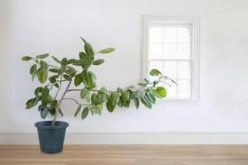 Pot Plants:  They Take a Turn for the Better
