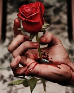 Fallen Petals & Strangers