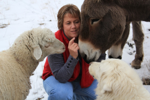 Cat Urbigkit with two livestock guardian animals, and a sheep.
