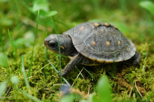 Turtles symbolize primal mother and Mother Earth.