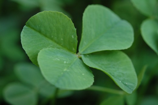 Legend has it that when Eve left the Garden of Eden, she took a four-leaf clover for good luck.