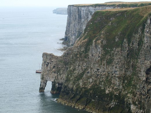Bempton Cliffs near Flamborough Head is a wildlife nature reserve monitored by RSPB