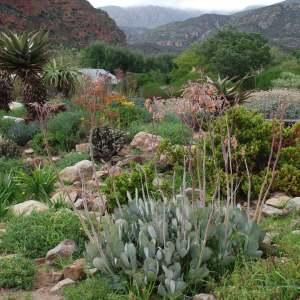 Indigenous garden, Cedar Guest House, Matjiesfontein Farm. Photo: Kayang Gagiano