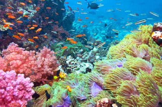 Fish in Belize's barrier reef.