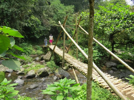A bamboo bridge leading to the waterfall.