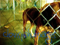 Help to End Euthanasia of Animals in Shelters
