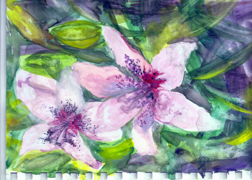 Lily Stars - 2014 gouache on mixed media paper