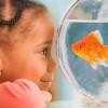 swatis hub profile image