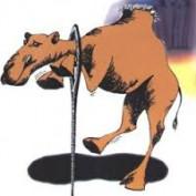 mishpat profile image