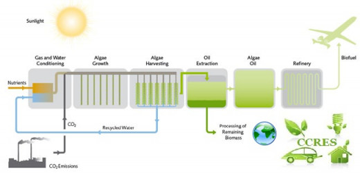 Process flow diagram of biomass being converted into biofuel