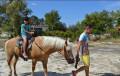Amanda's Little Horsey