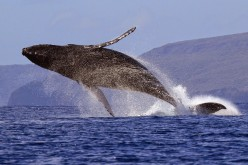 Whale Watching In Our Ocean So Blue; Short Poems and Images*