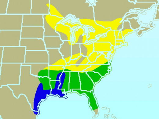 yellow indicates summer-only range, blue indicates winter-only range, and green indicates  year-round range of the species.