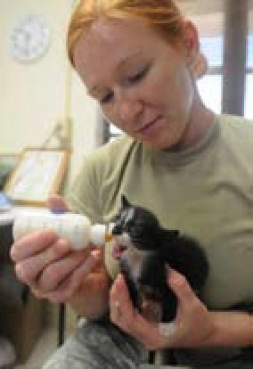 Feeding a baby Kitten