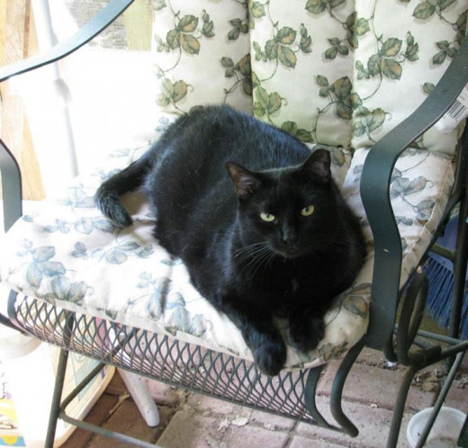The newest member of our troop, young Pepper she-cat relaxes in a chair on our new porch.