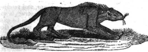 A rompo was said to be a secretive creature that fed only on dead bodies rather than killing to eat.