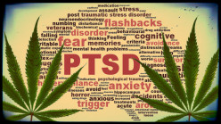 Marijuana as a Treatment for PTSD