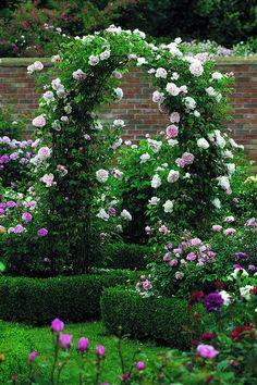 Rose Arbours