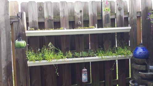 Container gardening using rain gutters.