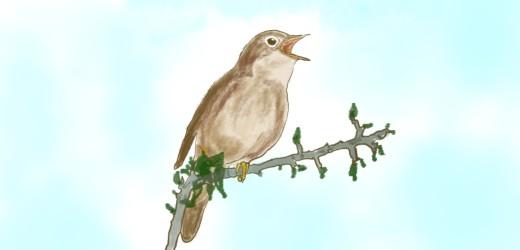 Bird Symbolism and Spiritual Gifts | Exemplore