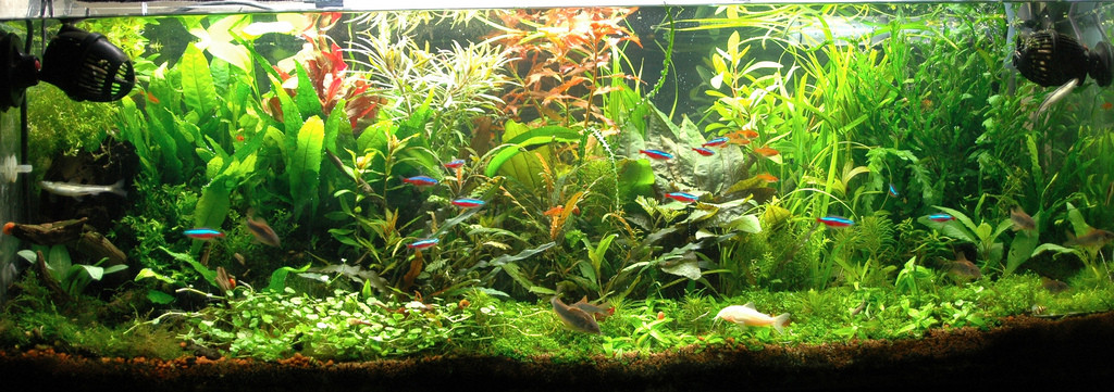 how to remove green algae spots from fish tank