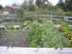 Your First Michigan Vegetable Garden