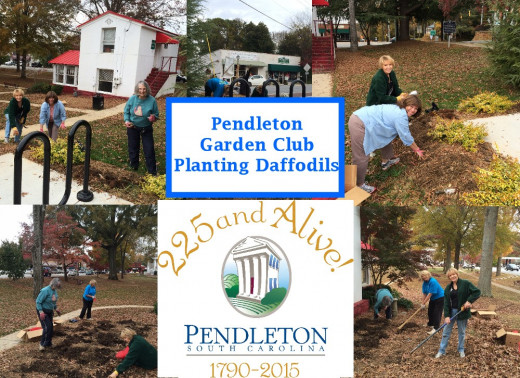 Over 14,000 bulbs will be planted around Pendleton in preparation for a spectacular spring in 2015
