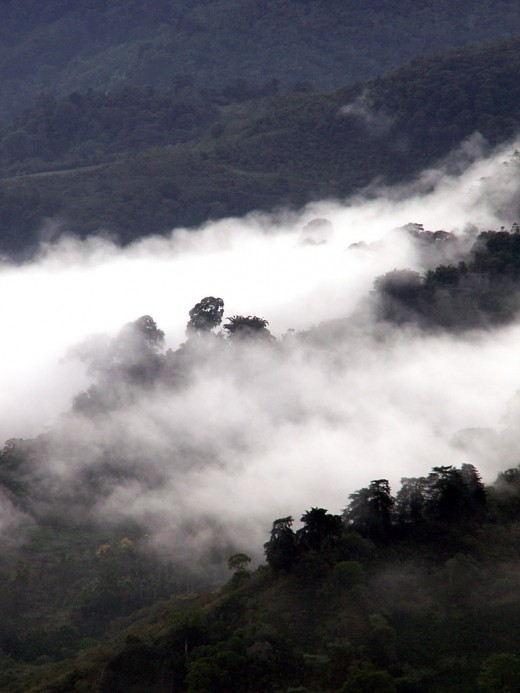 The rainforest of Costa Rica, shrouded in mist.
