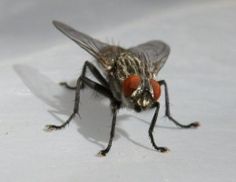 We swat houseflies unmercifully, with no thought of any moral considerations.