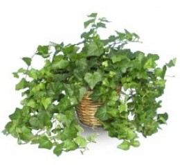 Houseplants for Cleaner Air